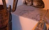 particolare-gatto