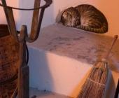 particolare-gatto trompe l\'oeil
